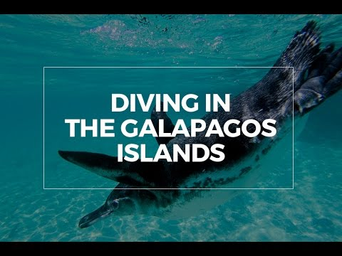 diving-in-the-galápagos-islands-//-ecuador-(original)