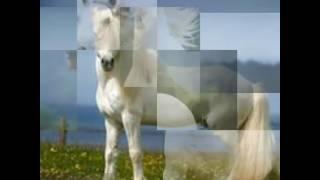 Белые лошади.