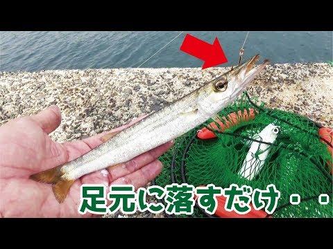 堤防からカマスの泳がせ釣り中足元にジグを落とすだけで・・・