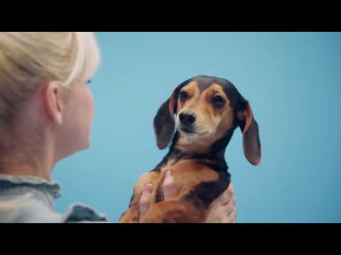 Congratulations! You're a Dog Person. | BarkBox, Cute Dachshund + Loving Human