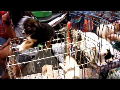 2013 10 26 Puppies for sale at Manila's Divisoria weekend ma