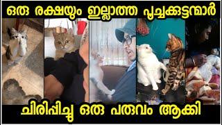 മനുഷ്യരേക്കാളും കിടുവായി ഡബ്സ്മാഷ് ചെയ്ത പൂച്ചകള് | JokesMalayalam | Best TikTok Cats