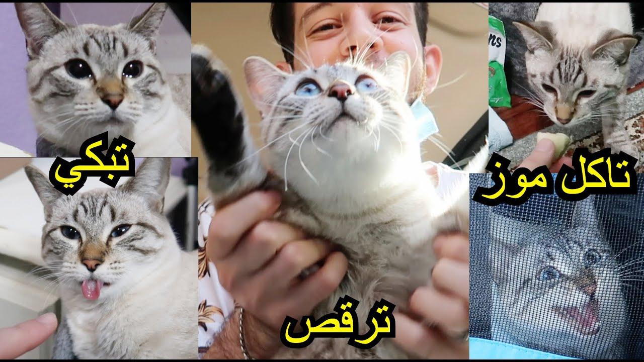 هذي القطة لن يكررها الزمن اغرب قطة مجنونة بالعالم مستحيل اكو هيج بزونة!!!