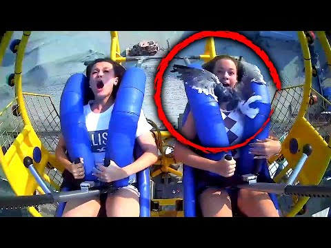 13-Year-Old-Gets-Facefull-of-Seagull-on-Amusement-Park-Ride