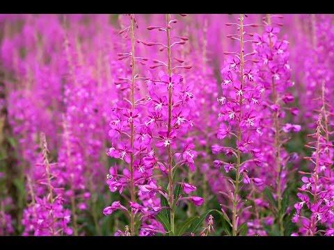 Метастазы в костную ткань: какие травы принимать?