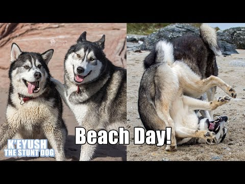 My Dog Takes His BEST FRIEND To The BEACH! Subtitled