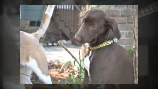 Pet Friendly Hotels | Durham, North Carolina