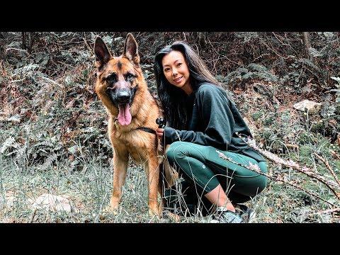Day in the Life of a German Shepherd - Hamner Road Trip