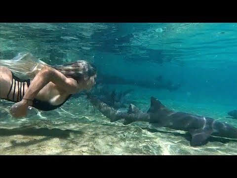 Baby shark#FOLLOWYOURHEART by Liliana Montoya swim