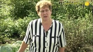 видео Описание сортов капусты