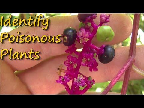 Poisonous Plants Identification - Pt. 1