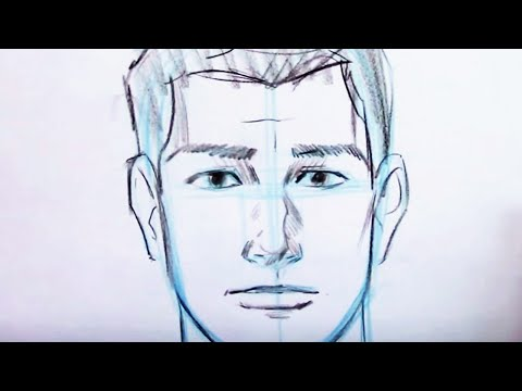 Basic Proportions of the Face
