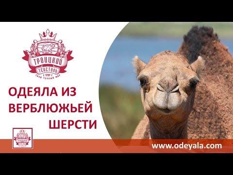 Одеяла коллекции ВЕРБЛЮЖЬЯ ШЕРСТЬ