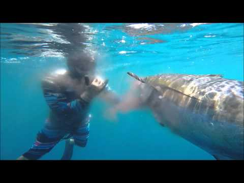 Spearfishing Montuosa Panama