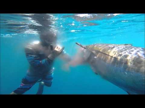 Spearfishing Montuosa Panama
