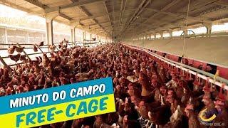 Minuto do Campo  -  FREE-CAGE - Galinhas livres de gaiolas