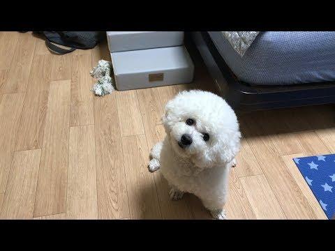 그냥 보기만 해도 귀여운 강아지 보리💕💕