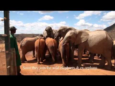 Kalama, Chemi Chemi & Ololoo's new life at Ithumba