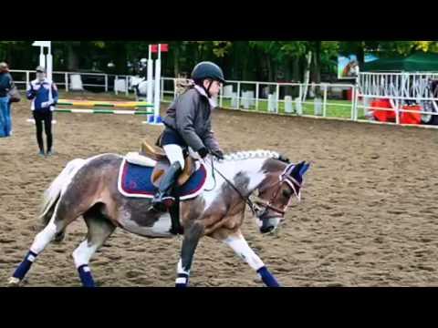 обзор на виды конного спорта (конкур,выездка,вольтижеровка )