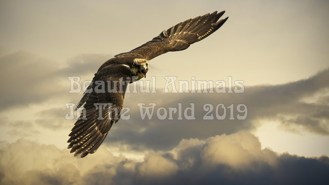 image Top of the world's most beautiful animals | Beautiful Animals In The World 2019