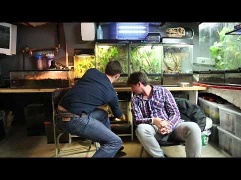 Les Escargots-Achatine