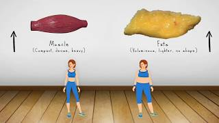 Weight Loss vs Fat Loss animated video/ Difference between fat and muscles