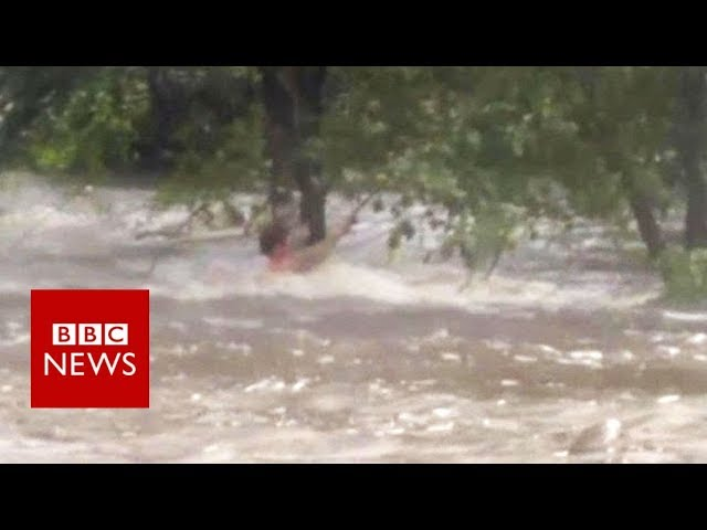Man clings to tree in Storm Harvey floods - BBC News