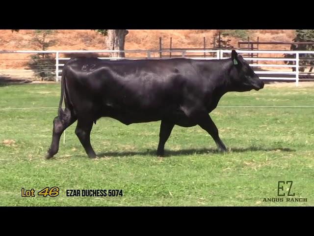 EZ Angus Ranch Lot 46