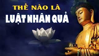 Luật Nhân Quả Là Gì - Cùng Nghe Những Lời Phật Dạy Để An Vui Hạnh Phúc - Phật Pháp Nhiệm Màu