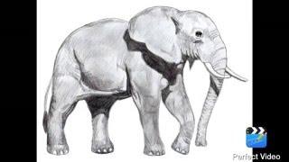 Как нарисовать слона. Урок рисования поэтапно.
