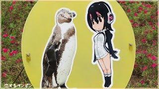 【海外の反応】「どうして涙が止まらないんだ…」アニメ『けものフレンズ』のパネルに恋したペンギン『グレープ君』天国へ