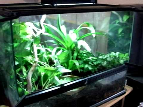 terrarium pour grenouilles hyla cinerea et agalychnis callydrias youtube. Black Bedroom Furniture Sets. Home Design Ideas