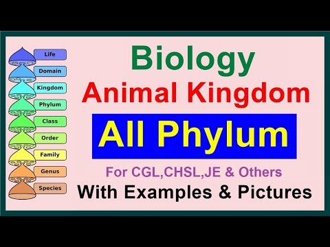 All Phylum || Kingdom Animalia || Biology