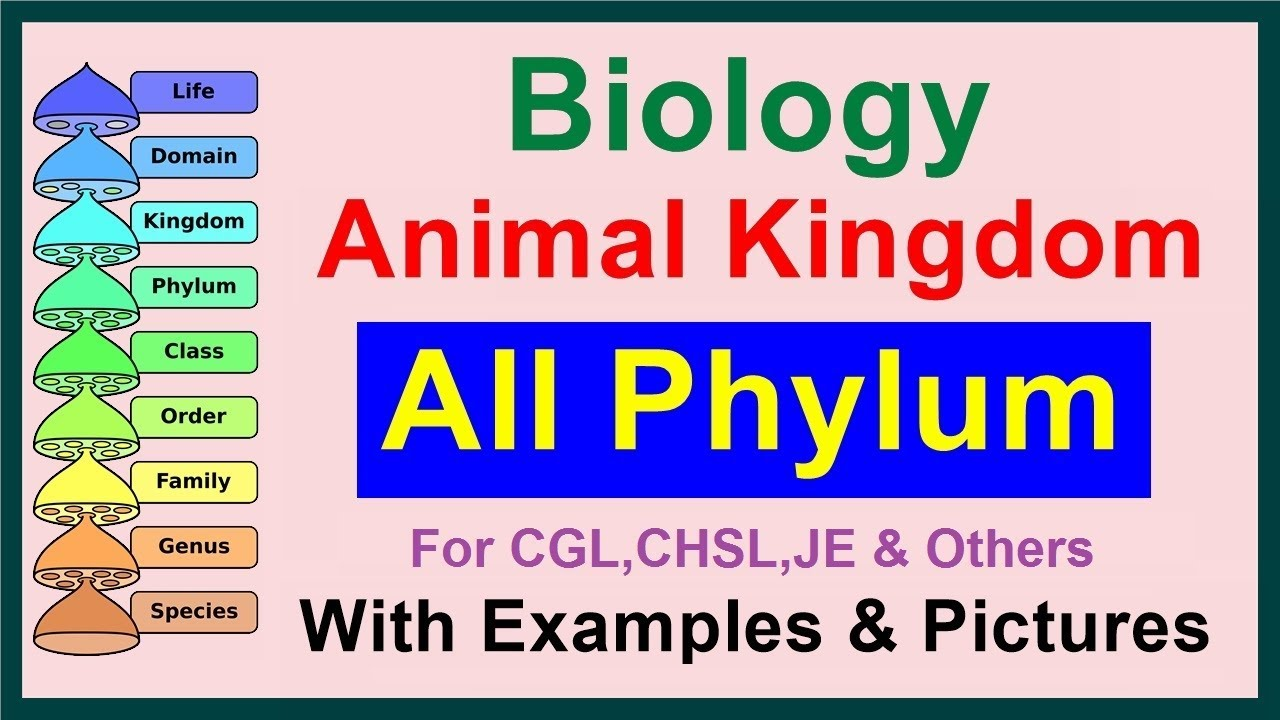 All Phylum || Kingdom Animalia || Biology - YouTube