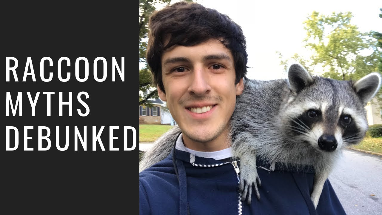 This Raccoon Influencer Says They Actually Make Good Pets But