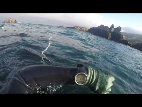 Free diving Big Sur area