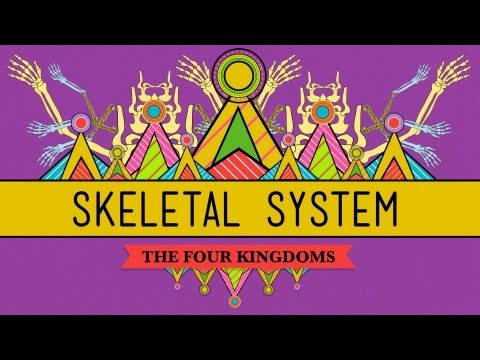 The Skeletal System: It's ALIVE! - CrashCourse Biology #30