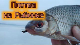 Плотва на безмотылку на Рыбинском водохранилище Сложная рыбалка на Рыбинке по последнему льду