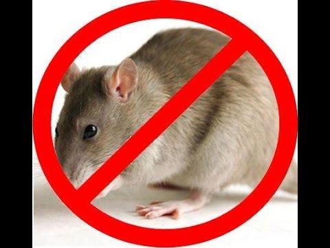 Mẹo Vặt Cuộc Sống - Mẹo đuổi chuột cực hay