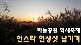 서울 하늘공원 억새축제에서 인생사진 찍기! (가는법, …