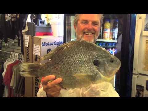 Al Lindner Holds Hector Brito's Record Redear Sunfish