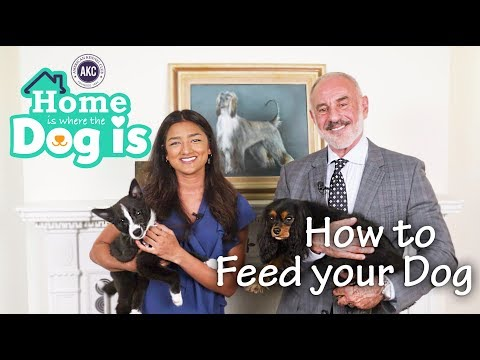 Episode 4 - How To Feed Your Dog - AKC's Home is Where the Dog is