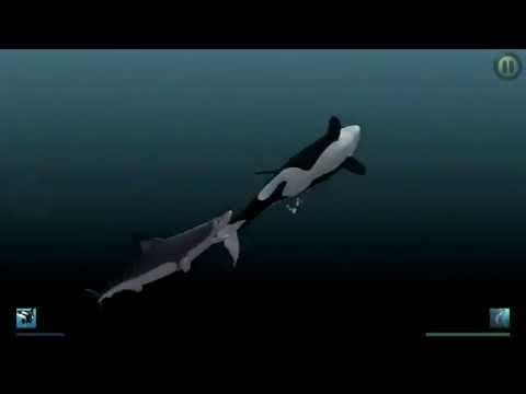 """""""I Am Dolphin"""" iOS Gameplay Video - Zoey vs Mako Shark"""