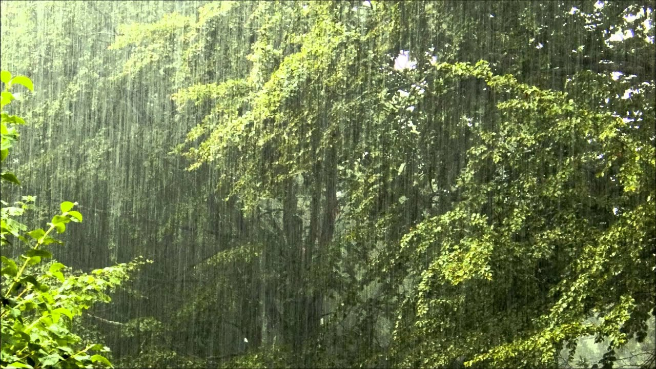 Rainy Fall Day Wallpaper Torrential Rain Relaxing Rain With Nature Sounds Youtube