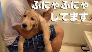 だいぶ慣れてきました。このままシャワー好き犬になってもらいたい。