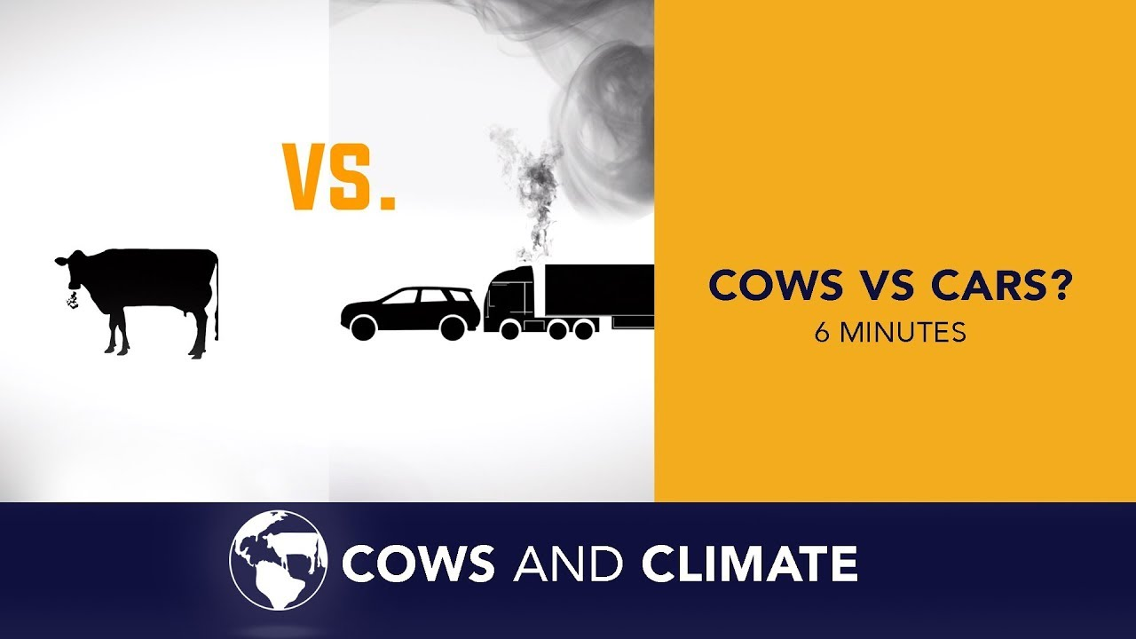 A new climate calculator for livestock aims to help ranchers reduce ...