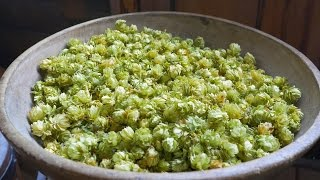Why Are Hops Used In Beers? - Q&A