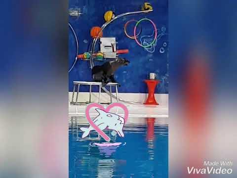Enjoy live trip to Dubai dolphinarium 🐬🐳🐋