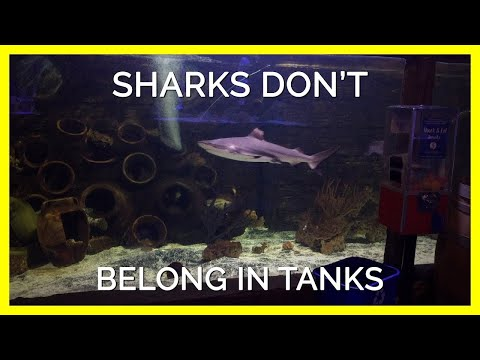 How Much Do You Really Know About Sharks?