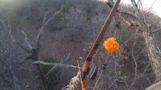 Oklahoma Giant Killed with the Longbow during Gun Season